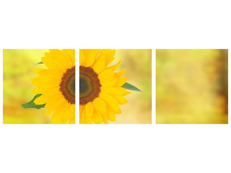 Panorama Metallic-Bild 3-teilig Die Sonnenblume