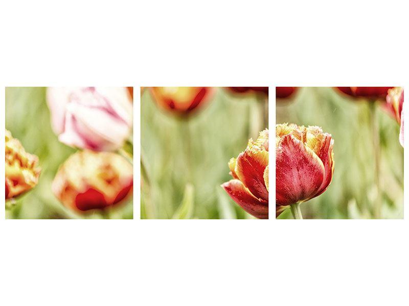 Panorama Metallic-Bild 3-teilig Die Schönheit der Tulpe