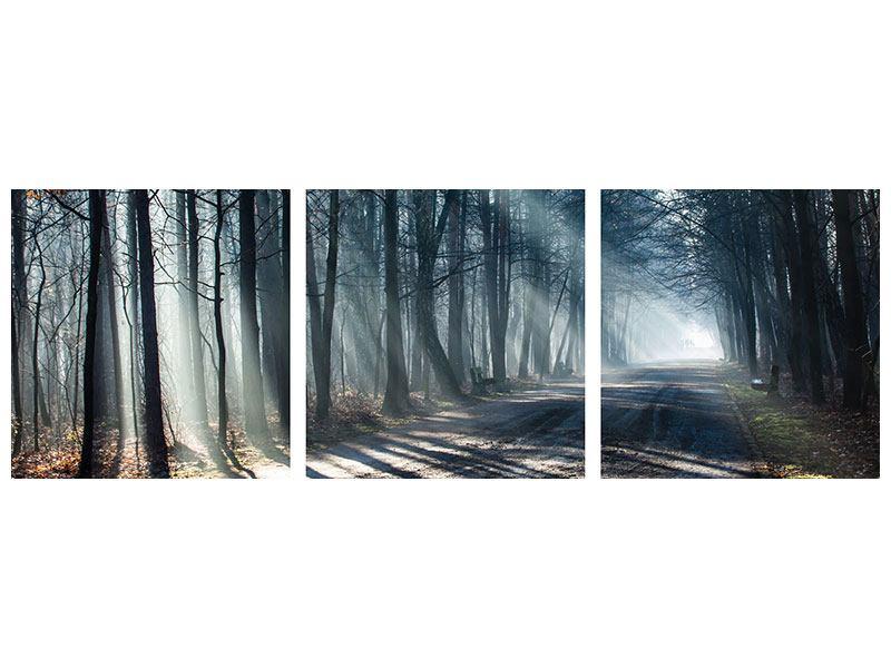Panorama Metallic-Bild 3-teilig Wald im Lichtstrahl