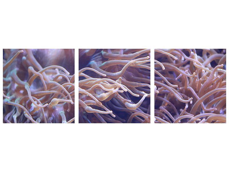 Panorama Metallic-Bild 3-teilig Korallenriff