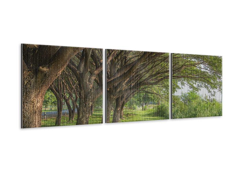 Panorama Metallic-Bild 3-teilig Alter Baumbestand