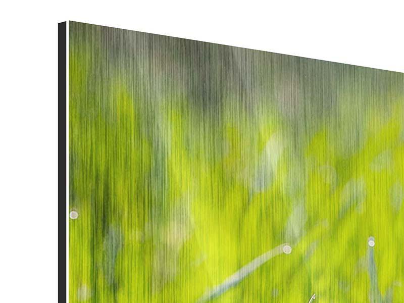 Panorama Metallic-Bild 3-teilig Gras im Morgentau