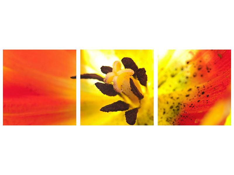 Panorama Metallic-Bild 3-teilig Die Narbe einer Tulpe XXL