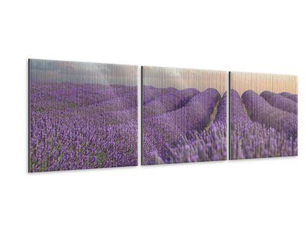 Panorama Metallic-Bild 3-teilig Das blühende Lavendelfeld