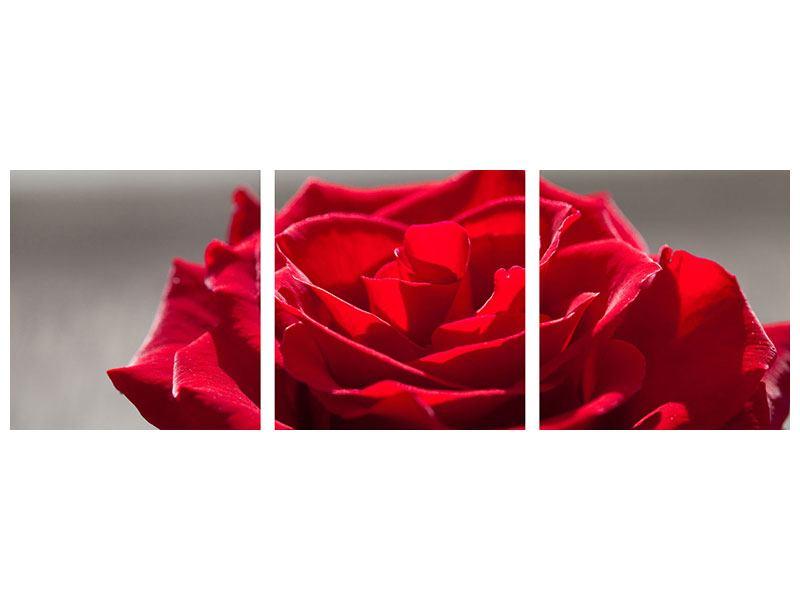 Panorama Metallic-Bild 3-teilig Rote Rosenblüte
