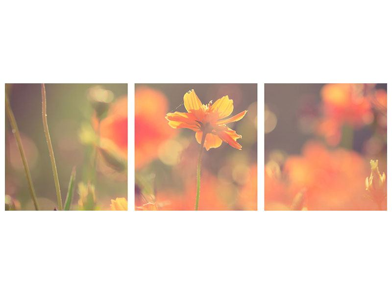 Panorama Metallic-Bild 3-teilig Blütenpracht