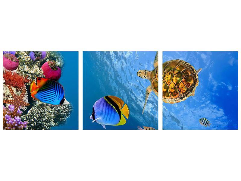 Panorama Metallic-Bild 3-teilig Fisch im Wasser