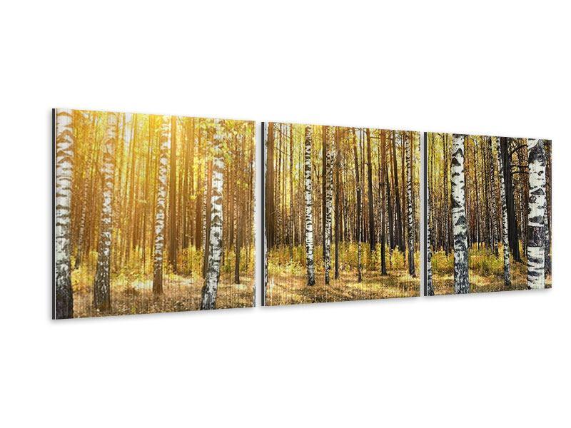 Panorama Metallic-Bild 3-teilig Birkenwald