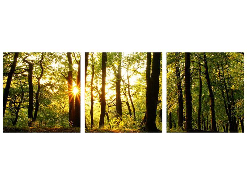 Panorama Metallic-Bild 3-teilig Sonnenuntergang zwischen den Bäumen
