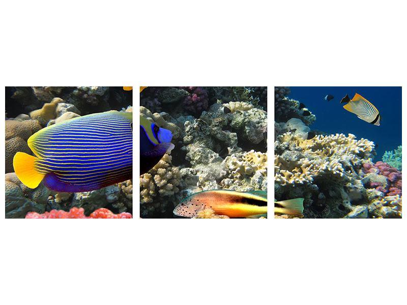 Panorama Metallic-Bild 3-teilig Das Aquarium