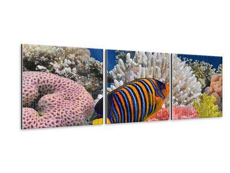Panorama Metallic-Bild 3-teilig Mit den Fischen tauchen