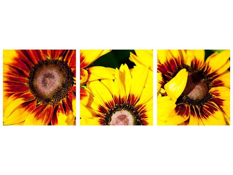 Panorama Metallic-Bild 3-teilig Reife Sonnenblumen