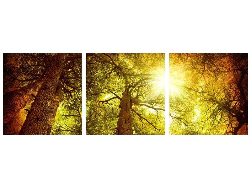 Panorama Metallic-Bild 3-teilig Cedar Baum