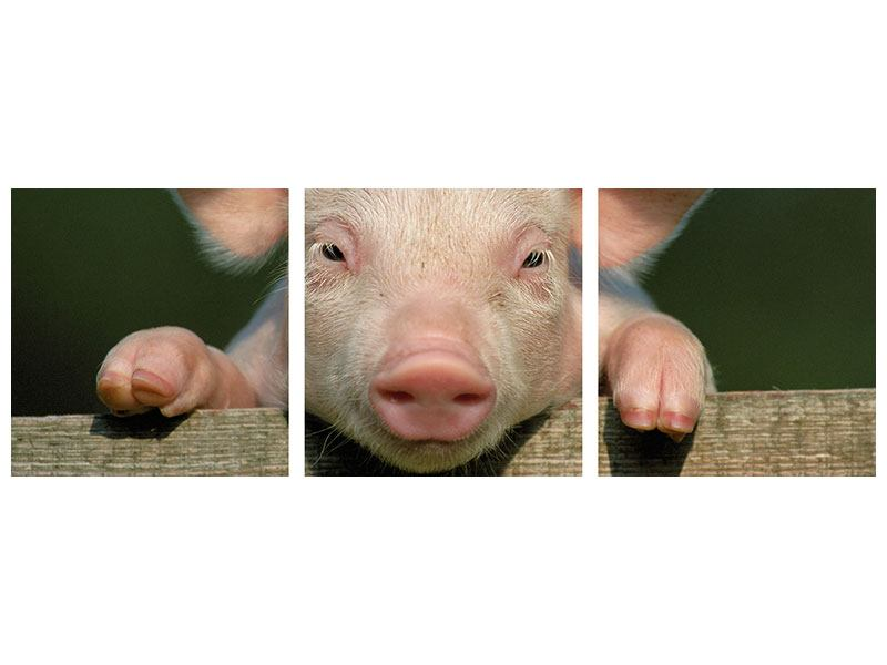 Panorama Metallic-Bild 3-teilig Schweinchen Namens Babe