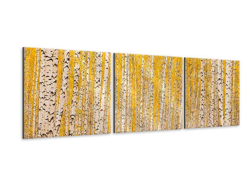 Panorama Metallic-Bild 3-teilig Der Birkenwald im Herbst