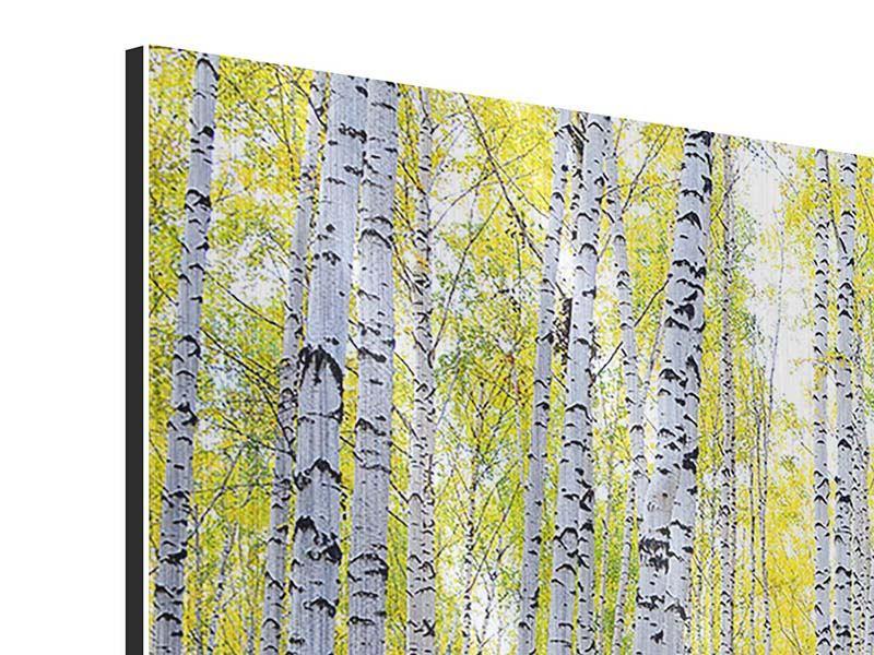 Panorama Metallic-Bild 3-teilig Herbstlicher Birkenwald