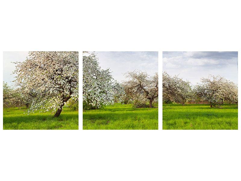 Panorama Metallic-Bild 3-teilig Apfelbaum-Garten
