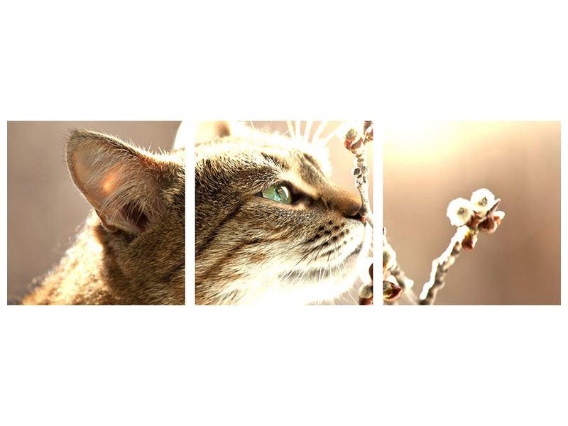 Panorama Metallic-Bild 3-teilig Die Katze