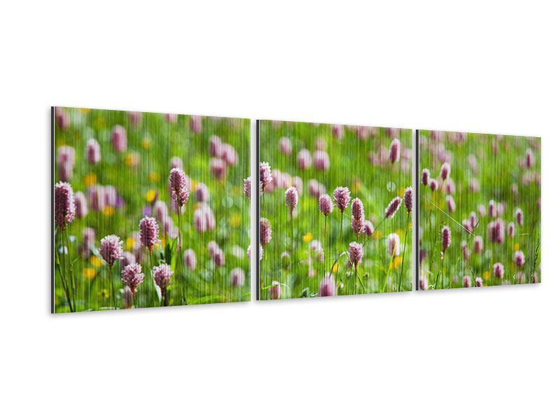 Panorama Metallic-Bild 3-teilig Der Wiesenklee