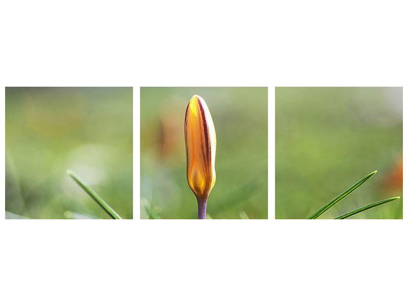 Panorama Metallic-Bild 3-teilig Die Blütenknospe