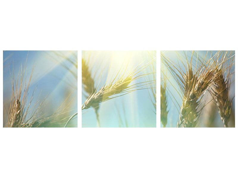 Panorama Metallic-Bild 3-teilig König des Getreides