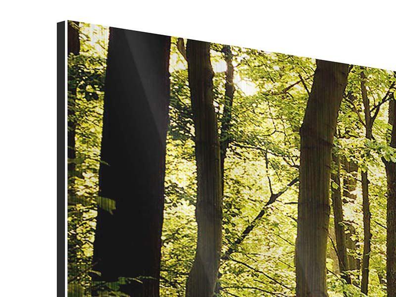 Panorama Metallic-Bild 3-teilig Sonnenaufgang im Wald