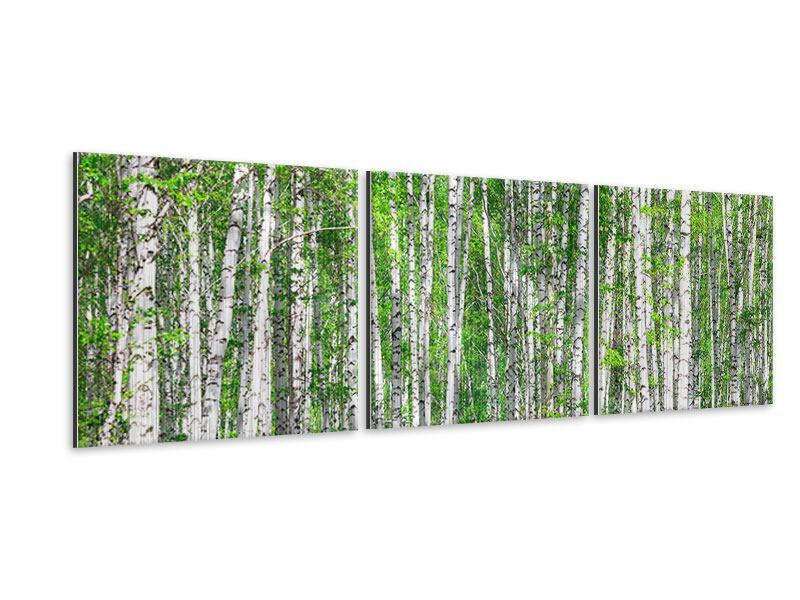 Panorama Metallic-Bild 3-teilig Der Birkenwald