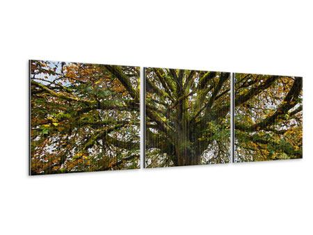 Panorama Metallic-Bild 3-teilig Mein Lieblingsbaum
