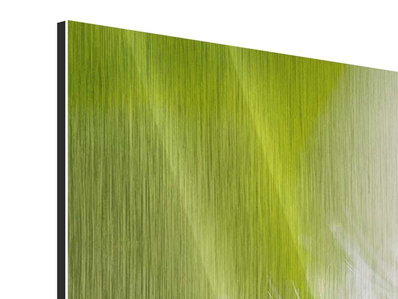 Panorama Metallic-Bild 3-teilig Pusteblume Löwenzahn