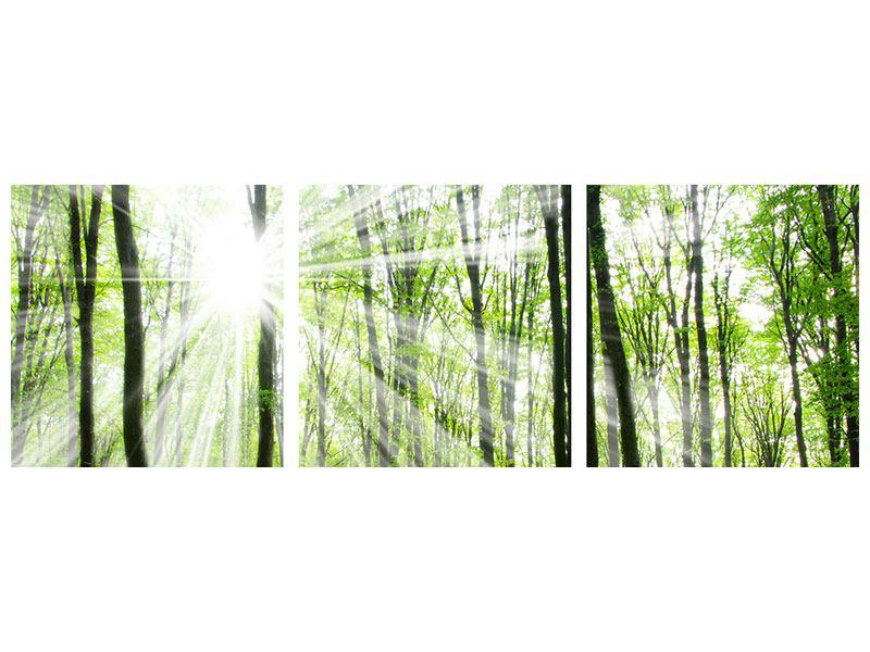 Panorama Metallic-Bild 3-teilig Magisches Licht in den Bäumen