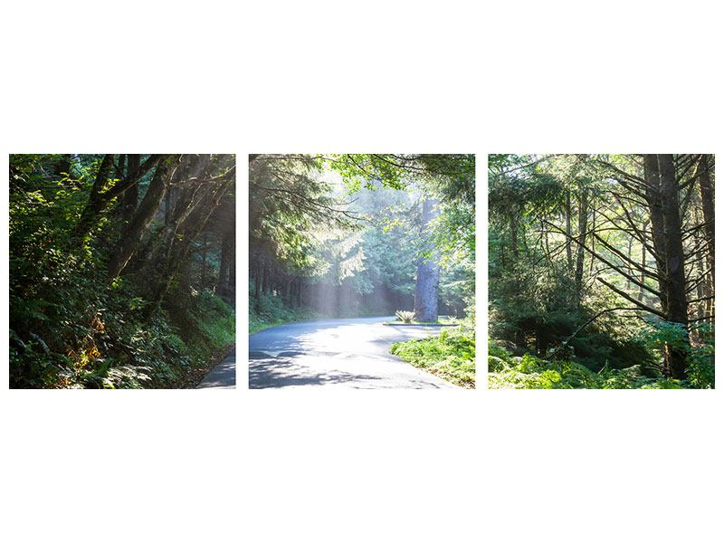 Panorama Metallic-Bild 3-teilig Sonniger Waldweg