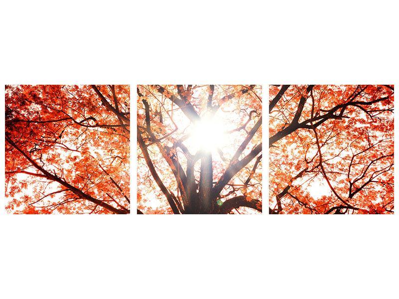 Panorama Metallic-Bild 3-teilig Herbstlicht
