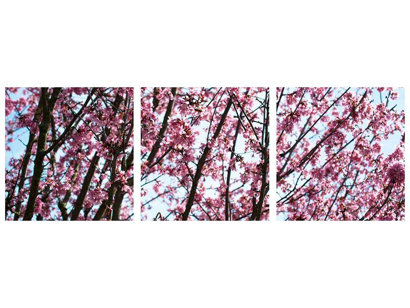 Panorama Metallic-Bild 3-teilig Japanische Blütenkirsche