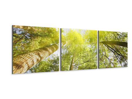 Panorama Metallic-Bild 3-teilig Baumkronen in der Sonne
