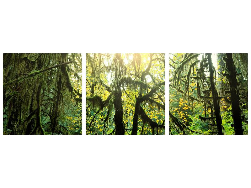Panorama Metallic-Bild 3-teilig Verträumter Wald