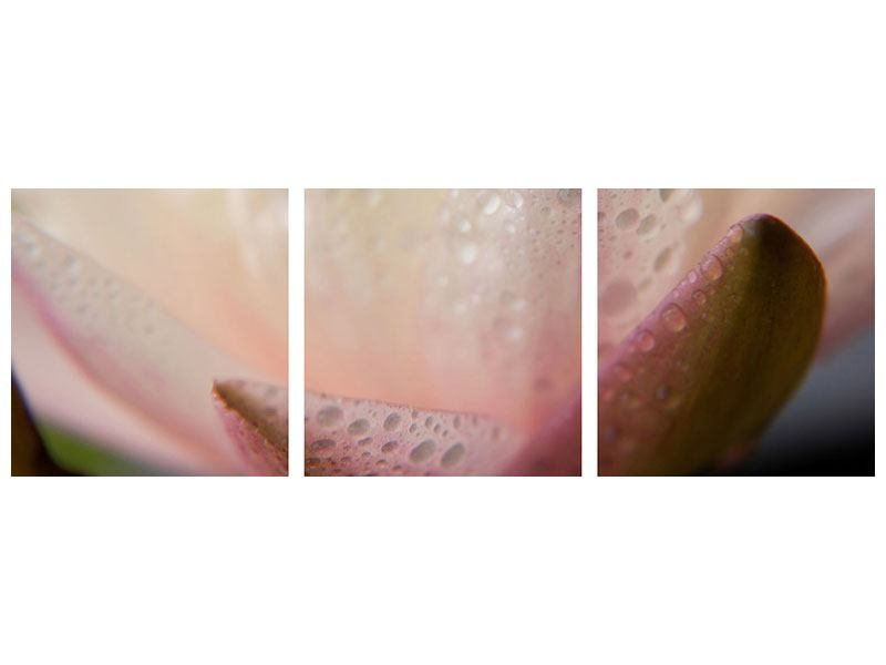Panoramic 3 Piece Metallic Print Close Up Lily
