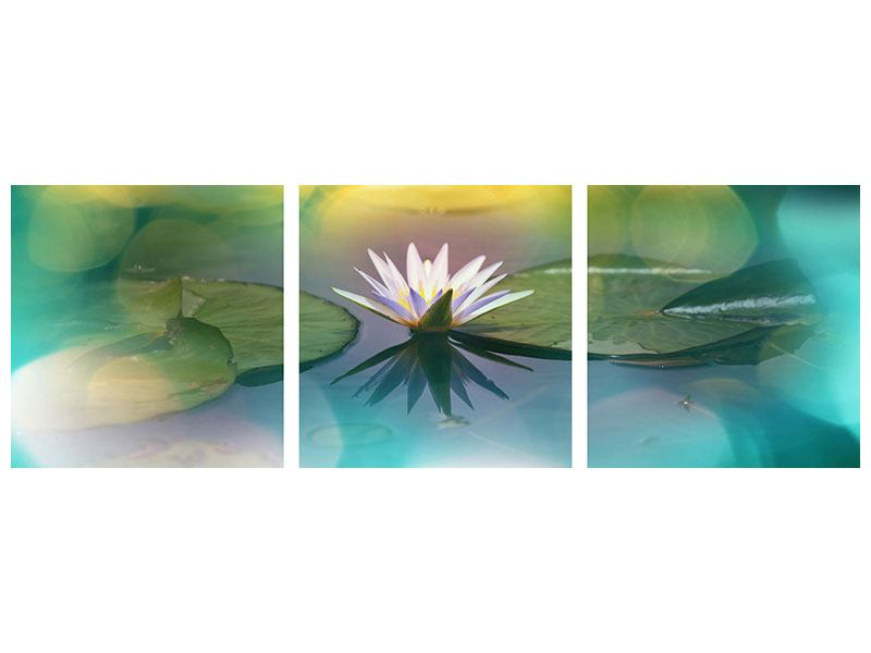 Panorama Metallic-Bild 3-teilig Lotus-Spiegelung