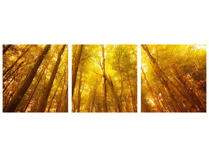 Panorama Metallic-Bild 3-teilig Herbstwald