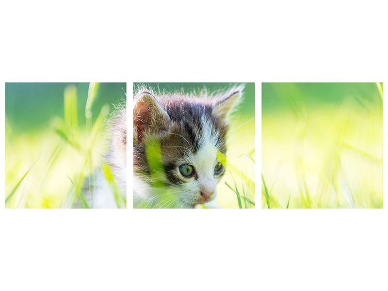 Panorama Metallic-Bild 3-teilig Kitten