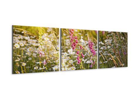 Panorama Metallic-Bild 3-teilig Sommerliche Blumenwiese
