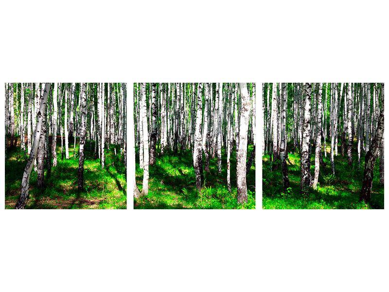 Panorama Metallic-Bild 3-teilig Sommerlicher Birkenwald