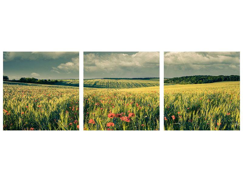 Panorama Metallic-Bild 3-teilig Der Mohn im Weizenfeld