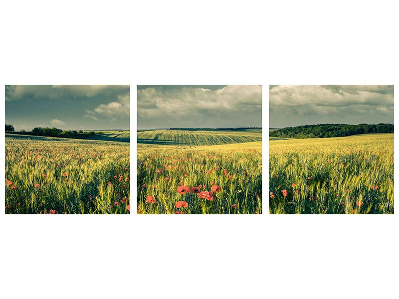 Panoramic 3 Piece Metallic Print The Poppy In Wheat Field