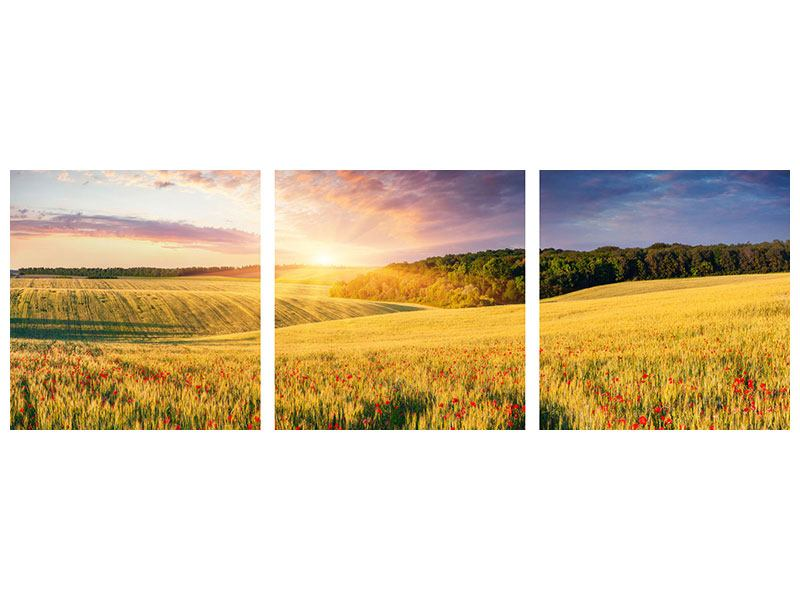Panorama Metallic-Bild 3-teilig Ein Blumenfeld bei Sonnenaufgang