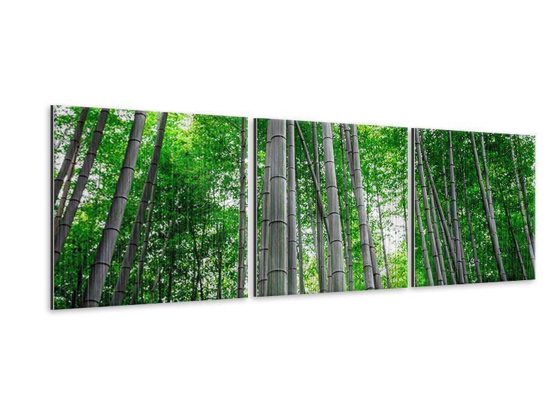 Panorama Metallic-Bild 3-teilig Bambuswald