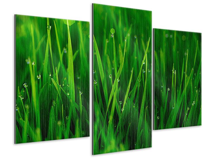 Metallic-Bild 3-teilig modern Gras mit Morgentau
