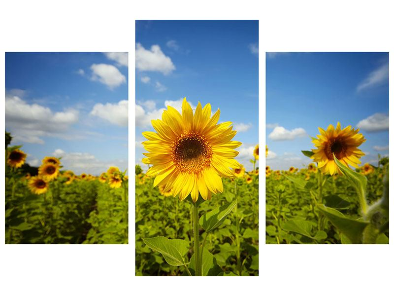 Metallic-Bild 3-teilig modern Sommer-Sonnenblumen