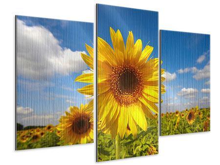 Metallic-Bild 3-teilig modern Das Feld der Sonnenblumen