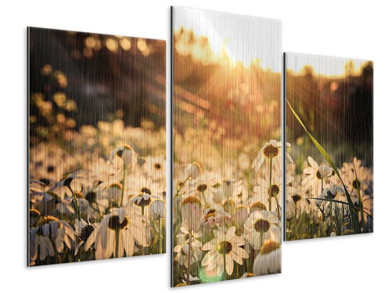 Metallic-Bild 3-teilig modern Gänseblümchen bei Sonnenuntergang