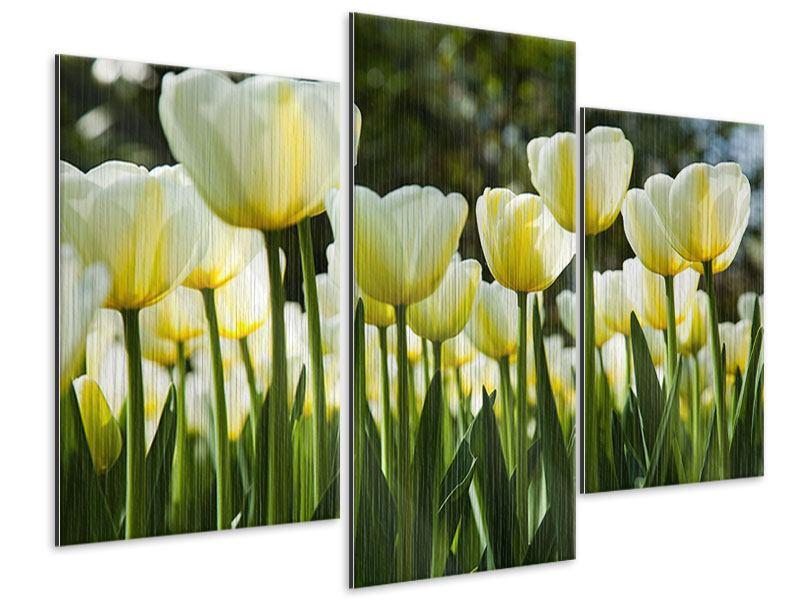 Metallic-Bild 3-teilig modern Tulpen bei Sonnenuntergang